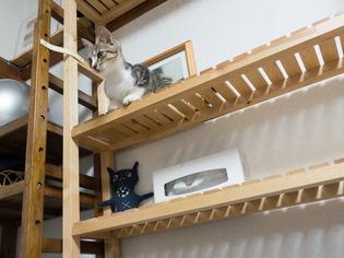 cats08