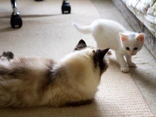 愛猫達13