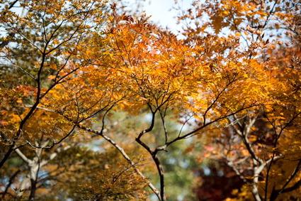 神代植物園19