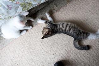 愛猫達16