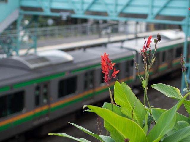 鉄路(根府川駅)14