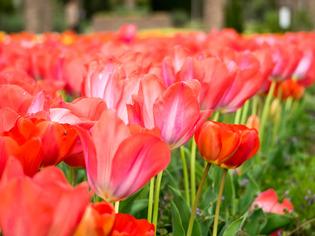 花菜ガーデン12