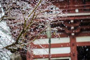 雪景色77