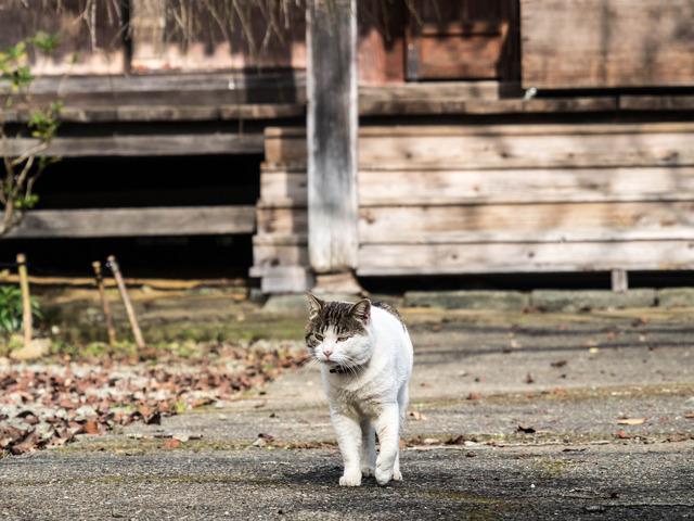 大日堂・猫2