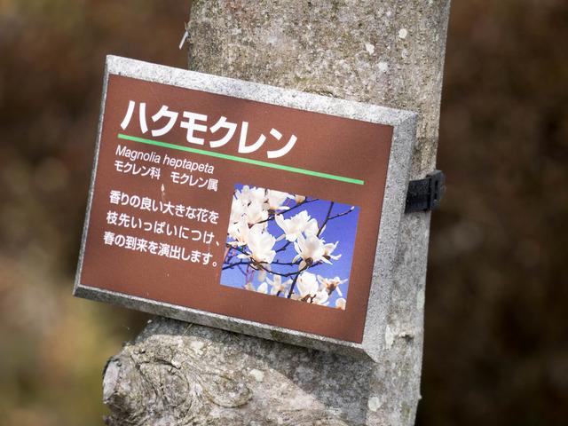 秦野戸川公園22