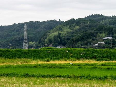 いすみ鉄道8