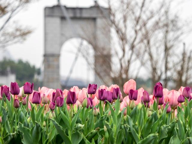 戸川公園19