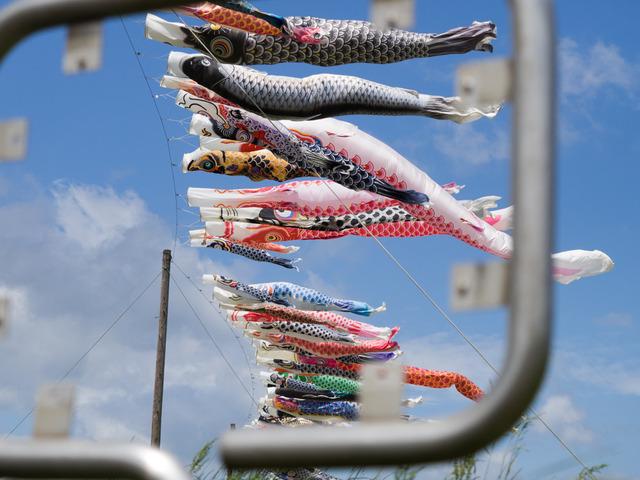 相模大凧祭り10