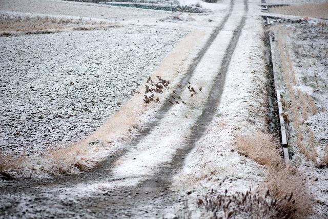 雪景色63