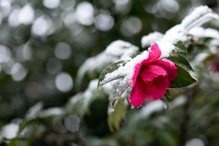 雪景色65