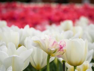 花菜ガーデン18