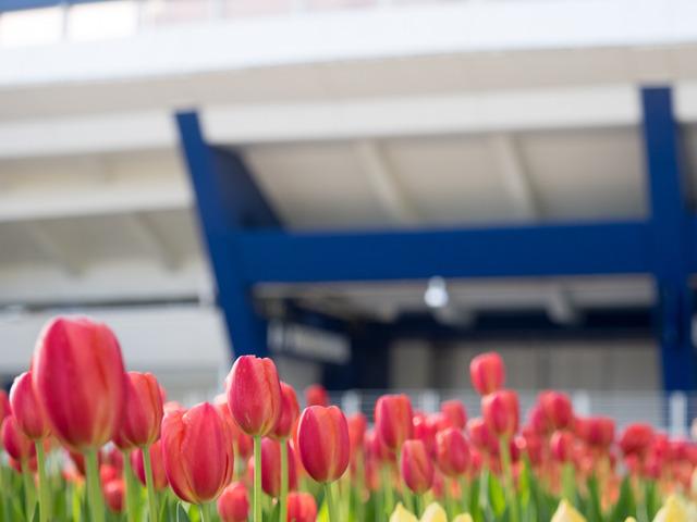 YP・tulip5