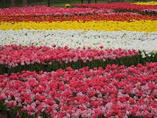 花菜ガーデン8