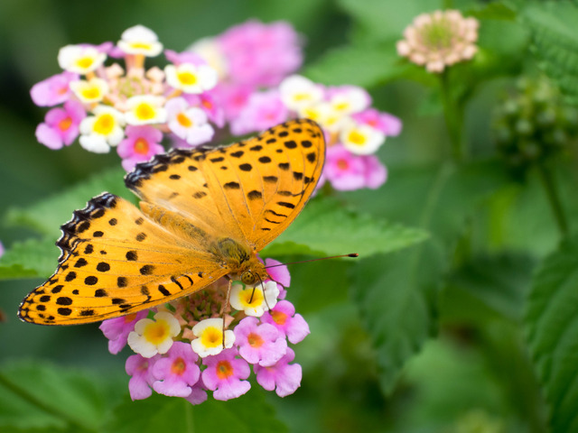 花と蝶10