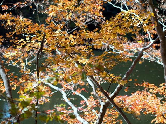 震生湖23