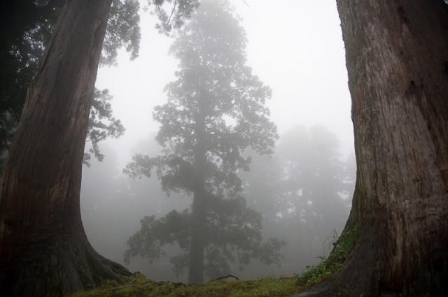 出羽三山神社18