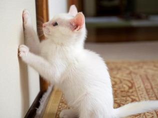 愛猫達18