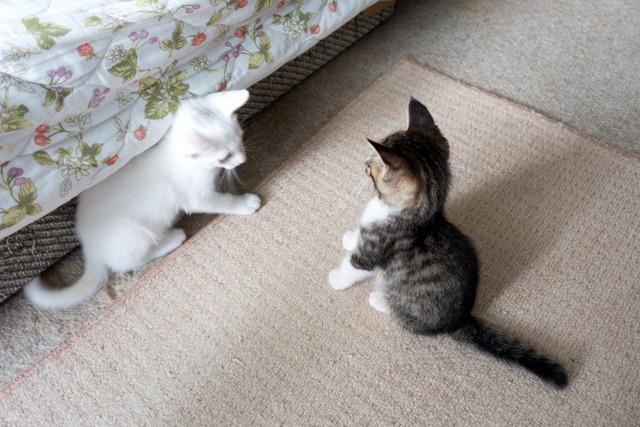 愛猫達14
