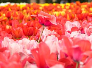 花菜ガーデン11