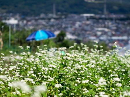 渋沢丘陵11