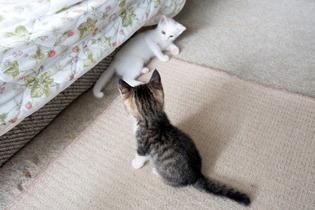 愛猫達15