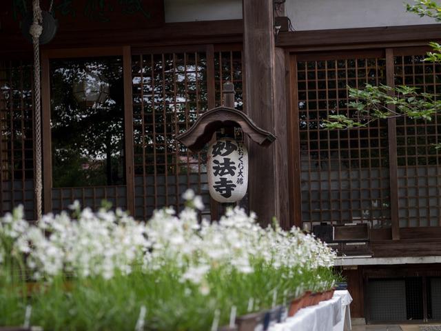 妙法寺15