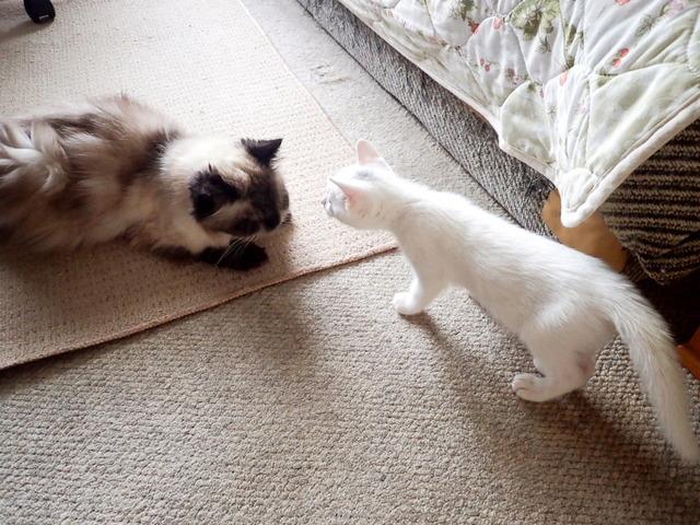 愛猫達11