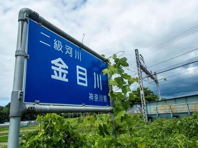 金目川01