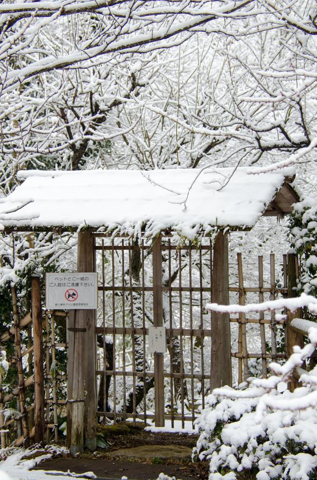 雪景色100