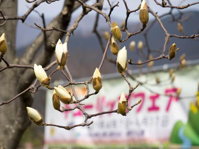 秦野戸川公園23