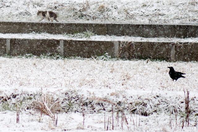 雪景色71