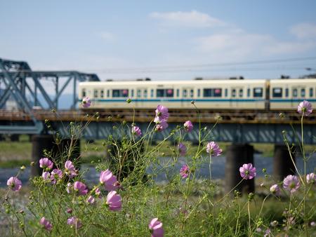 酒匂川鉄橋7