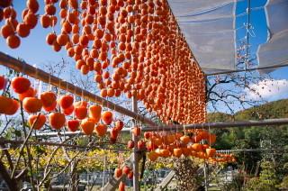 枯露柿の里15