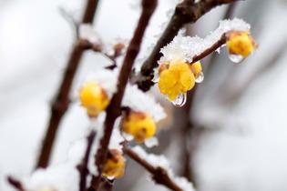 雪景色66
