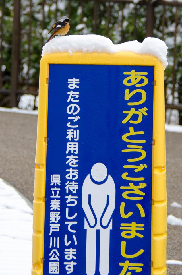 雪景色122
