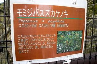 秦野戸川公園14