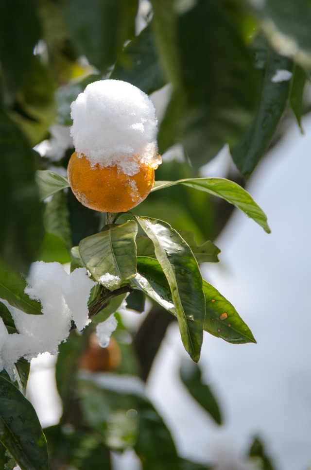 雪景色104