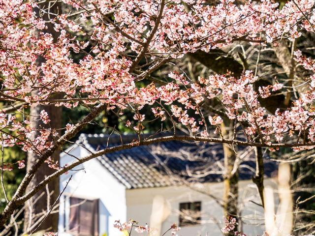 小田原街景11