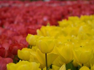 花菜ガーデン14