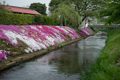 shibutagawa 5