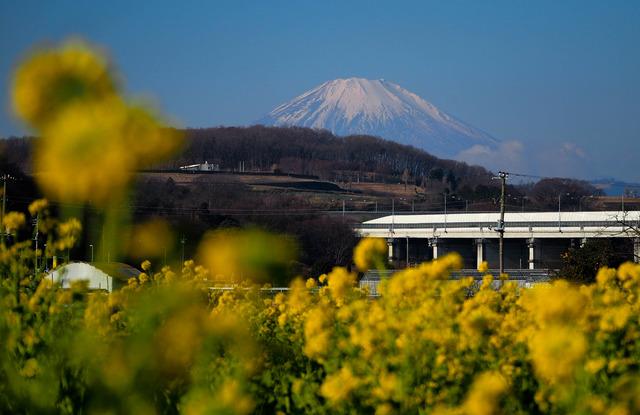 菜の花と富士山01