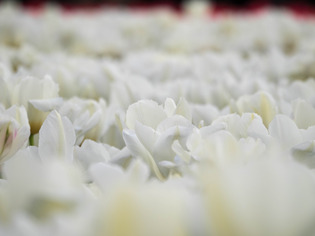 花菜ガーデン24