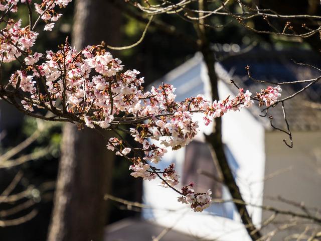 小田原街景12
