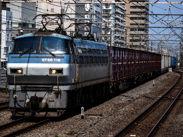 EF66 116電気機関車02