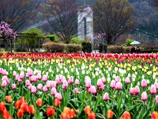 戸川公園4