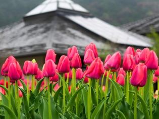 戸川公園18