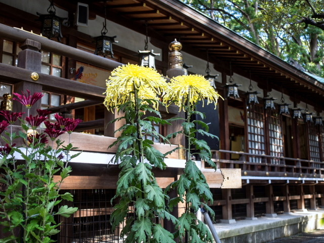 平塚八幡宮8