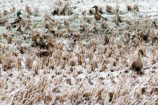 雪景色73