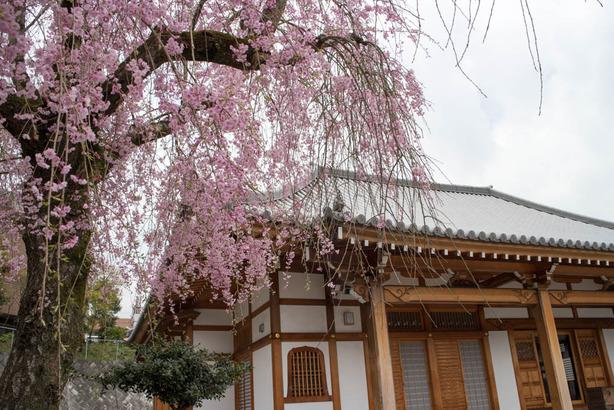 泉蔵寺06