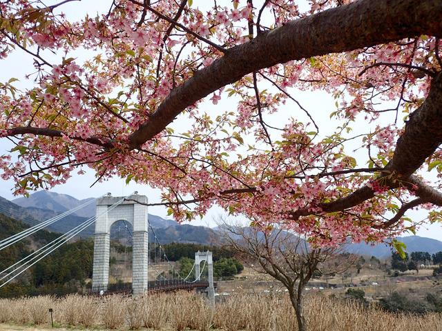 秦野戸川公園15